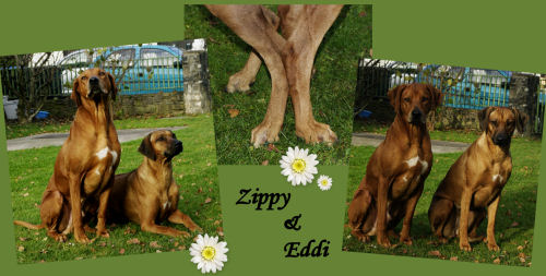 Zippy + Eddi