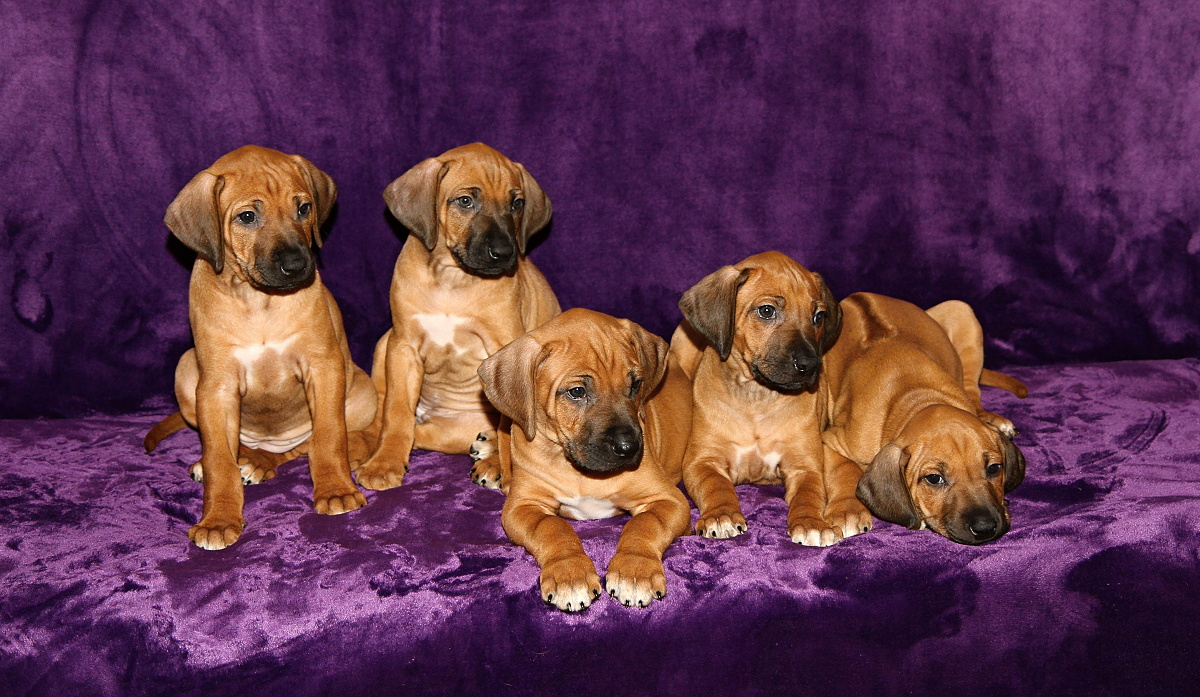 Manwë G litter all